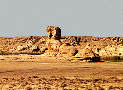 'The Camel' at Tineida